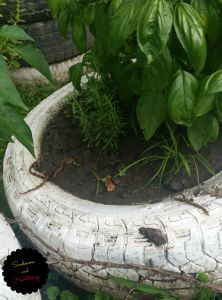 garden rosemary
